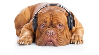dog with headphones