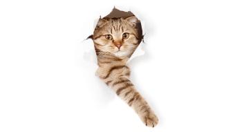 cat in paper hole