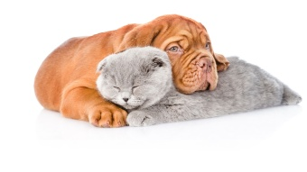 puppy dog embracing gray cat